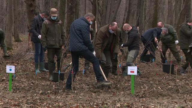 Klaus Iohannis a plantat stejari și a lansat o provocare viitorului Guvern. Care este situația pădurilor din România