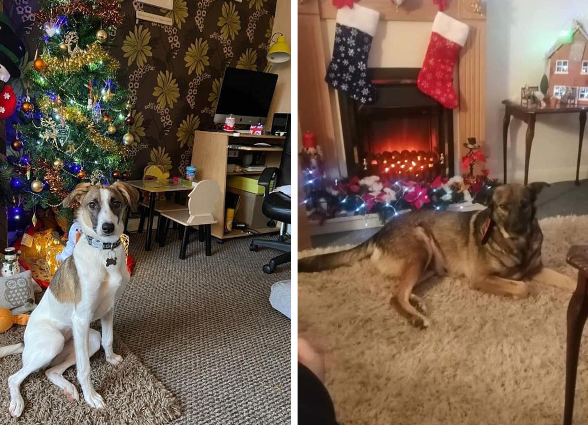 (P) Cum sunt salvați anual sute de câini fără stăpân cu sprijinul unui website de imobiliare