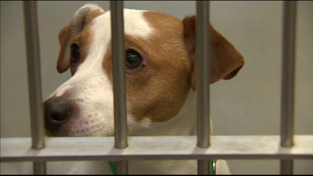 Cazurile de câini furați în Marea Britanie, în creștere cu 250%. Care ar fi motivul
