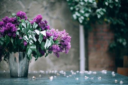(P) 5 motive pentru care trebuie să dăruiești flori