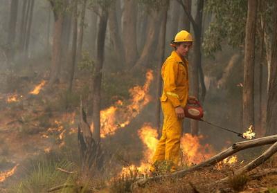 Un puternic incendiu de vegetatie a provocat haos in SUA