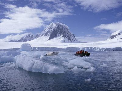 """""""Extraterestrii"""" traiesc sub gheata Antarcticii! NASA a filmat unul"""