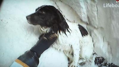 Catel salvat, dupa ce a cazut de la 100 de metri in apele Canalului Manecii