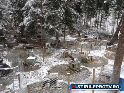 Scandal in Canada. 100 de caini husky, exterminati dupa JO din 2010. Video