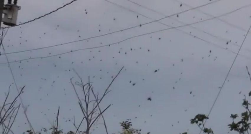 Fenomen ciudat in Brazilia. Intr-un oras a inceput sa