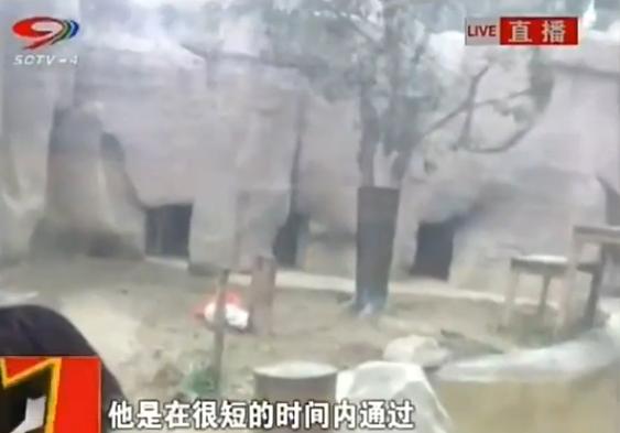 Momentul in care un barbat s-a aruncat in cusca unor tigri la un zoo din China pentru a fi mancat de animale