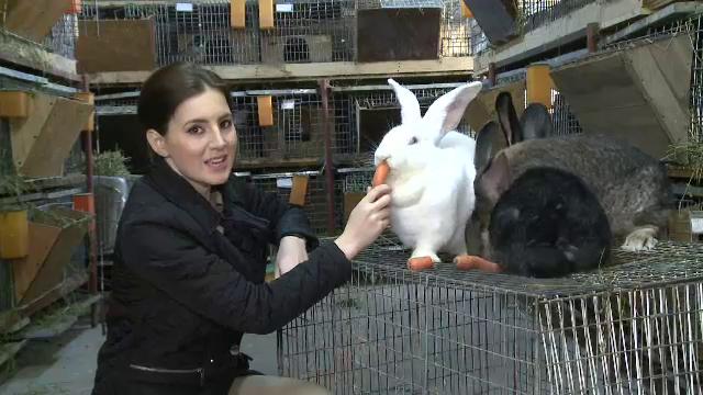 In 2012, Romania a importat 92 de mii de tone de iepure. De ce ajunge in farfuriile noastre carne