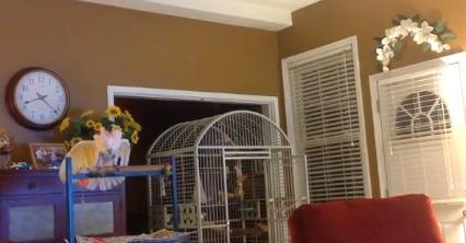 Un papagal repeta certurile care au dus la divortul fostilor stapani - VIDEO