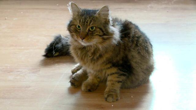 Operatiune de salvare a unei pisici disparute de patru zile, in Constanta. Pompierii, nevoiti sa sparga un perete