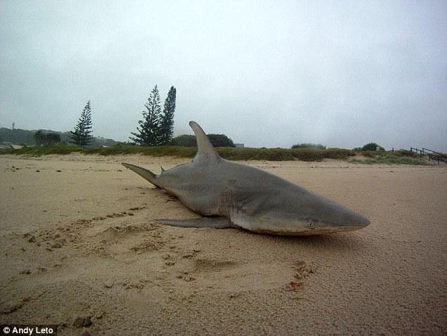 Australia a fost lovita de ciclonul Marcia. Descoperirea facuta pe o plaja din Queensland