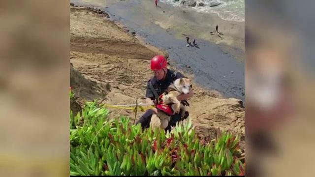 Operatiune de salvare cu 16 pompieri pentru un caine ramas blocat pe o stanca. De ce a fost necesara implicarea ampla
