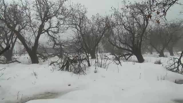 Prăpăd în livezi din cauza zăpezii. Cum pot obține pomicultorii despăgubiri de la stat