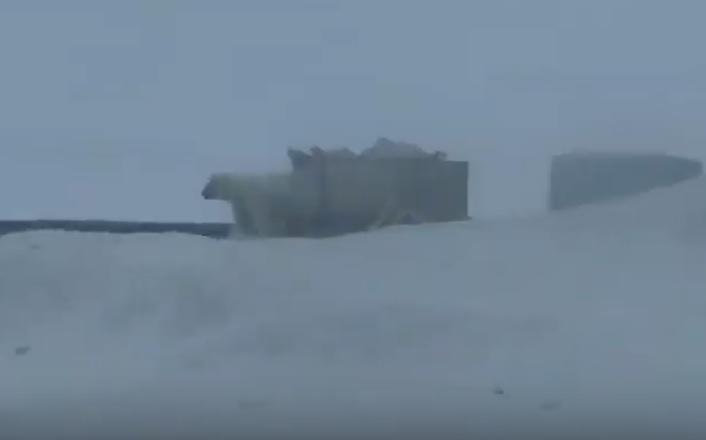 """Stare de alertă în Rusia. Un oraș este invadat de """"creaturi periculoase"""". VIDEO"""