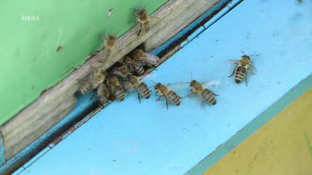 UE interzice României să folosească anumite pesticide care dăunează albinelor