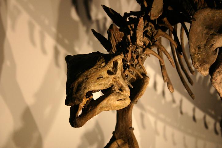Descoperire incredibilă în Israel. Cercetătorii au găsit o tumoare în coada unui dinozaur