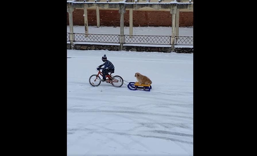 Imagini amuzante în Cluj. Un copil pe bicicletă își plimbă cățelul cu sania