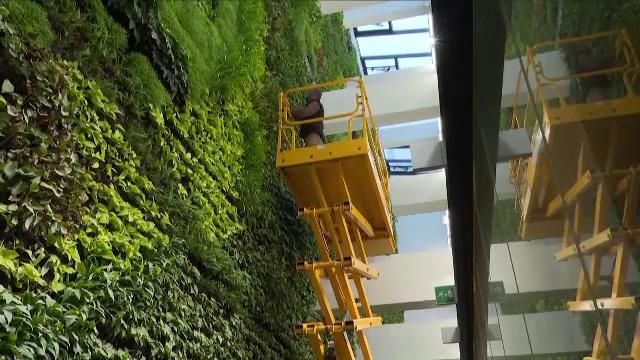 """În Santander a fost creată cea mai mare grădină verticală din Europa. """"Este ceva uluitor"""""""