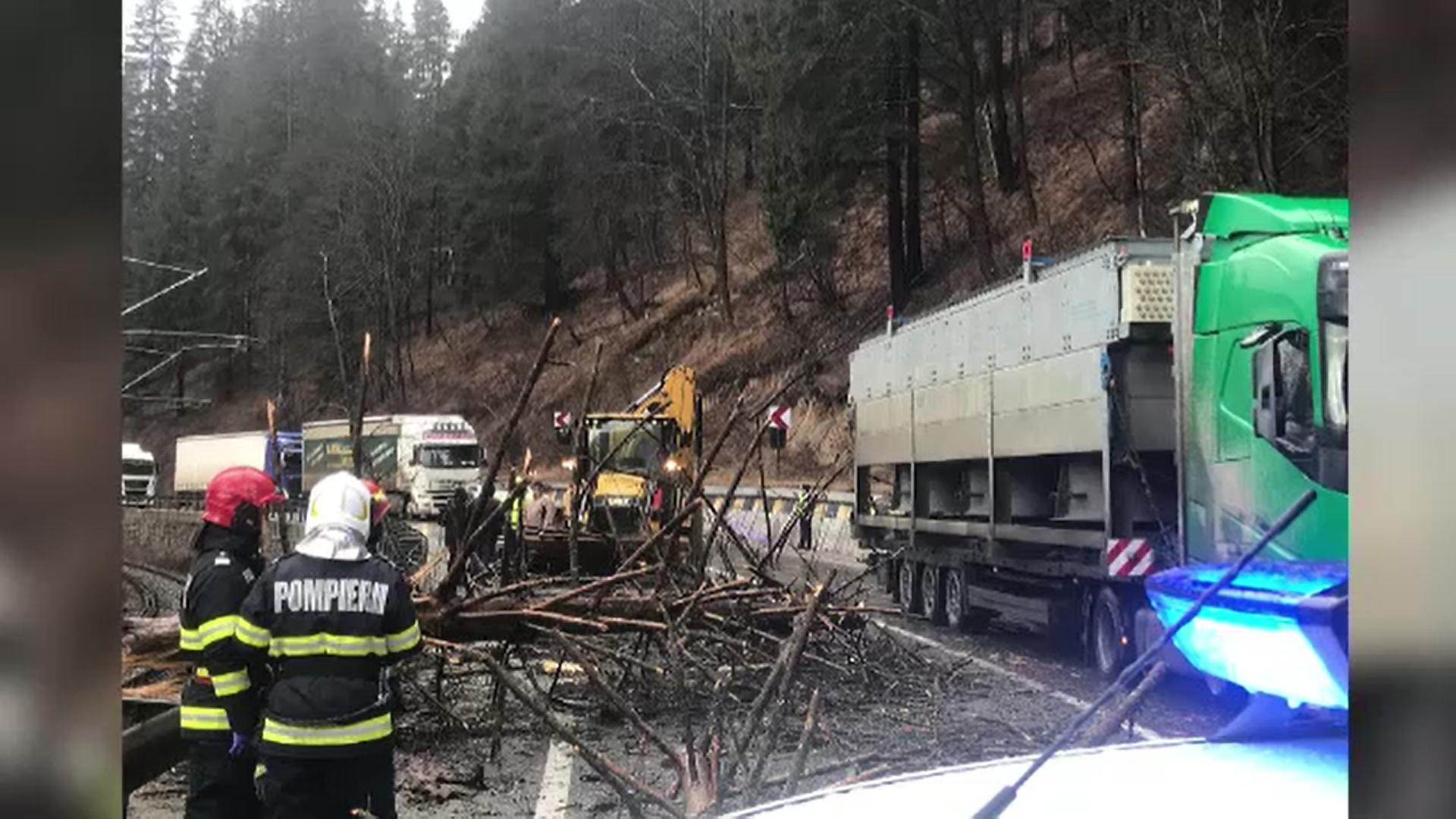 Incident tragic în Suceava. O femeie a murit după ce un copac a căzut peste mașina în care se afla