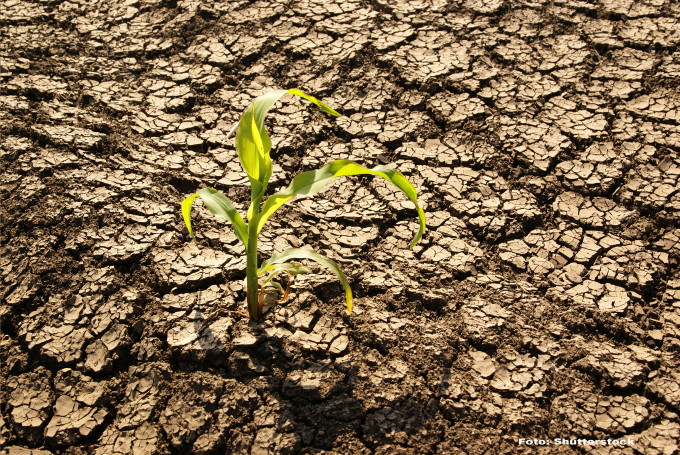 După ani de secetă, rezervele de apă din sol au început să se refacă, în România. Cele mai favorizate zone