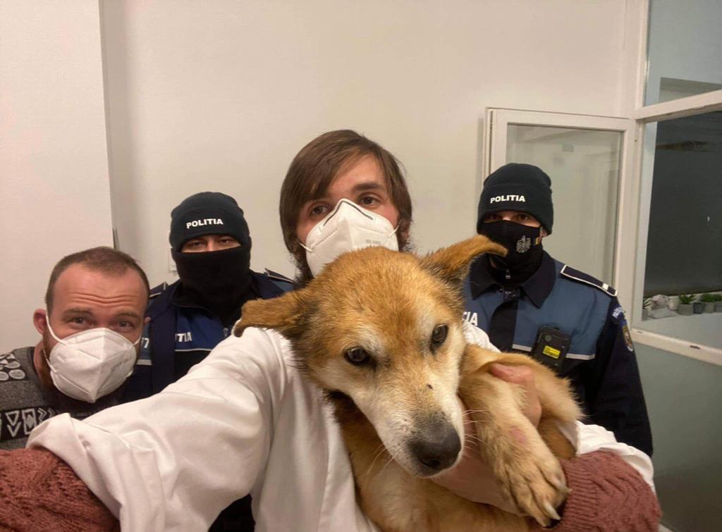 Câine bătrân și bolnav abandonat pe un ger cumplit, salvat de la moarte de polițiștii din Botoșani