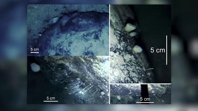 Creaturi surprinzătoare, descoperite sub calota glaciară de la Polul Sud. Ce spun cercetătorii