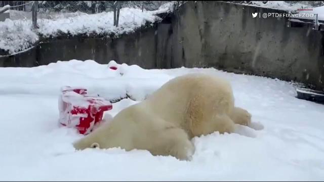 Animalele de la o grădină zoo din SUA, fericite de venirea zăpezii. Cum s-au distrat în nămeți