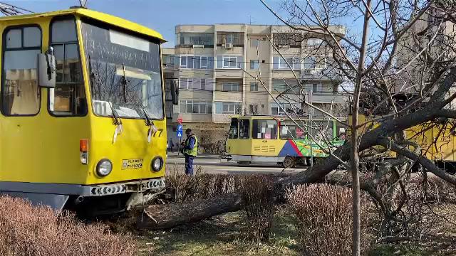 Un tramvai a deraiat de pe șine și s-a oprit într-un pom, din cauza unui șofer care nu a acordat prioritate