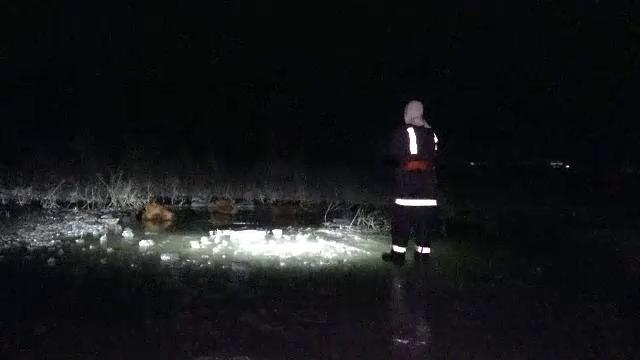 """Șase vaci au scăpat de la o fermă din Mureș și au căzut într-un lac înghețat. """"Nu a observat sluga"""""""
