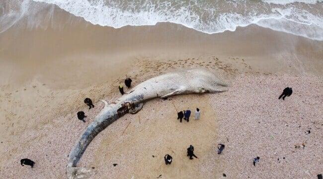 Creatura uriasa descoperita pe o plaja din Israel. Oamenii au fost surprinsi. GALERIE FOTO