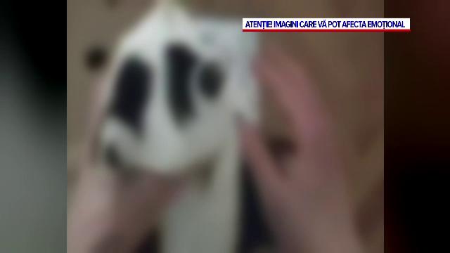 Adolescent din Cluj, dat pe mana politiei de propriul tata dupa ce s-a filmat cand tortura si omora un pui de pisica