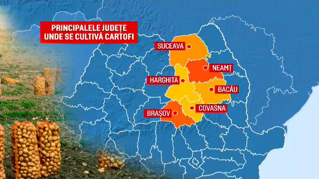 """Cum s-a """"prăjit"""" producţia de cartofi a României. Jumătate din consum vine acum din import"""