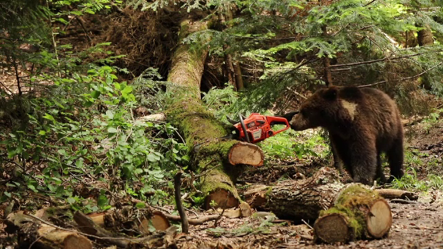 Populația de urși din România va fi evaluată printr-un studiu cu analiză ADN, finanțat de UE