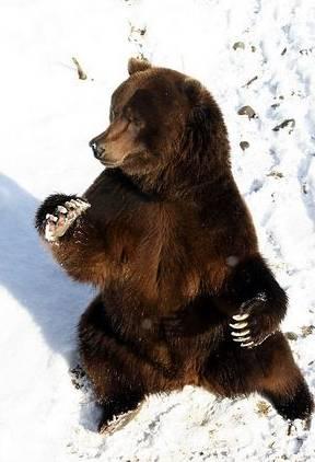Ursul meteorolog si cartita Phil: Iarna nu va pleca prea curand de la noi