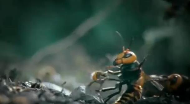 VIDEO spectaculos. 30 de viespi japoneze ataca o colonie de 30.000 de albine