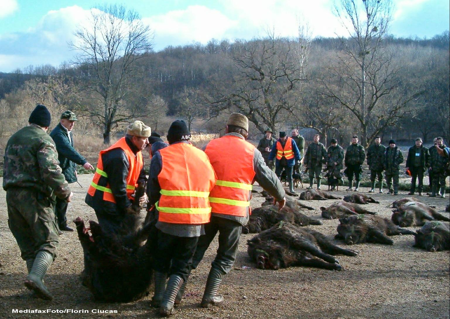 254 de mistreti au fost impuscati anul acesta la Balc. Carnea lor va ajunge la oamenii sarmani