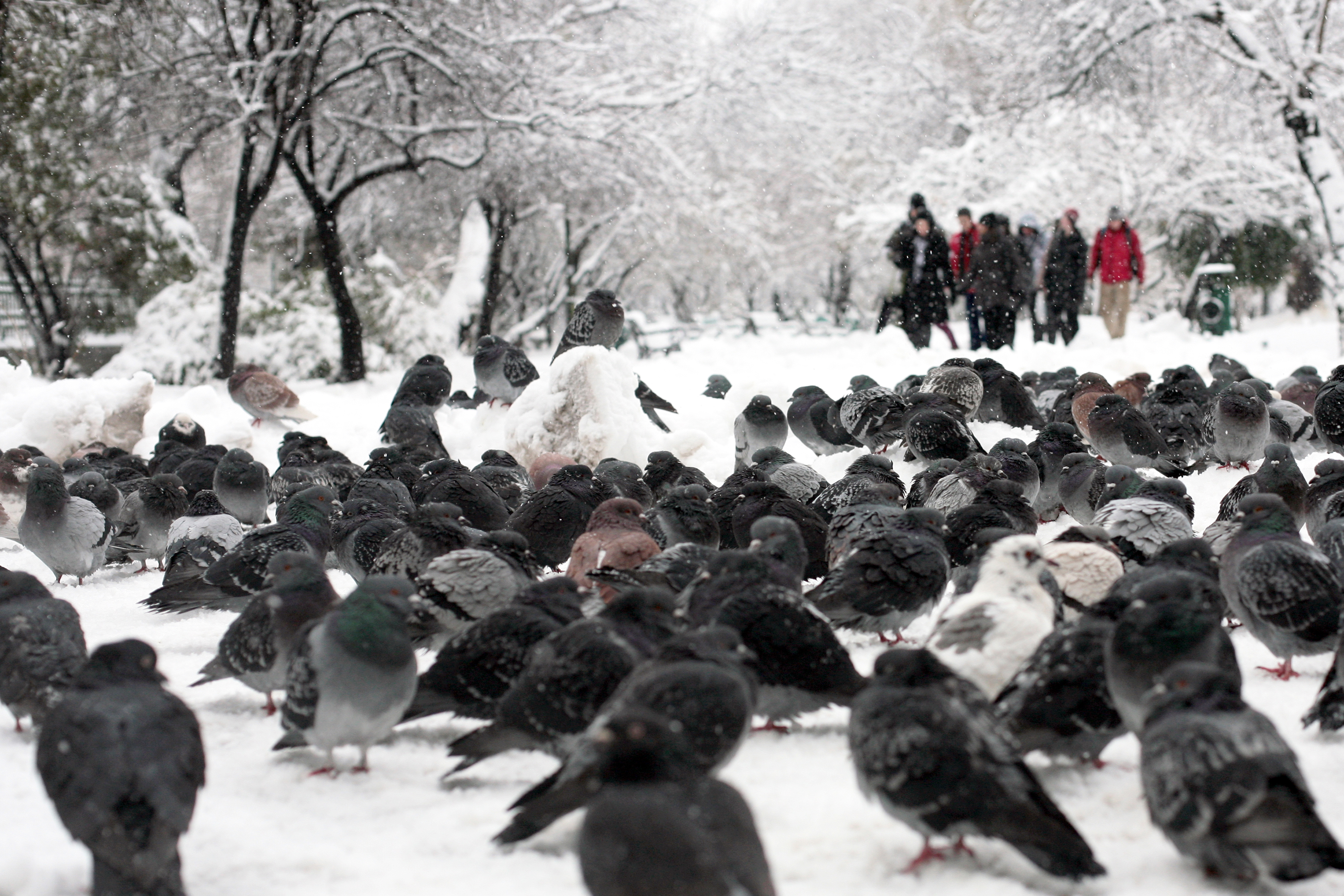 Trafic blocat, haos si masini distruse. Cum arata Capitala, dupa 22 de ore de ninsoare neintrerupta