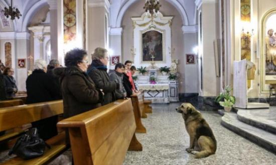 Lectia de loialitate data de un caine. Isi asteapta zilnic in biserica stapana moarta de 2 luni