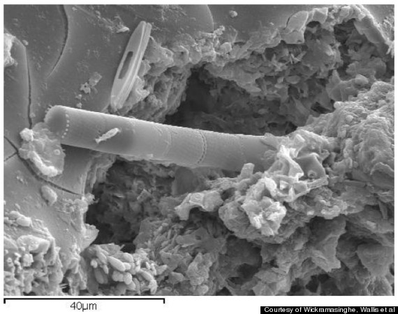 Un cercetator britanic sustine ca a gasit viata extraterestra pe un meteorit cazut in Sri Lanka