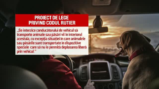 Custi speciale pentru animalele de companie transportate cu masina si interzicerea parcarii pe trotuar. Proiectele din 2016