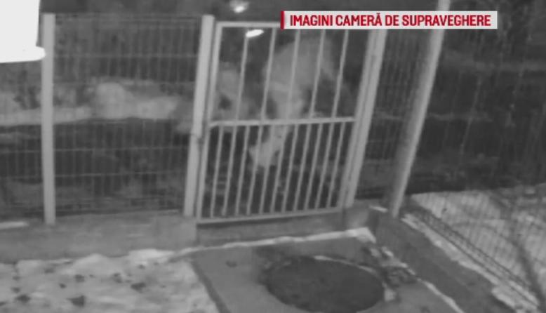 Noi detalii in cazul tinerilor injunghiati la Craiova. Un martor sustine ca a sunat de 2 ori pana au venit politistii