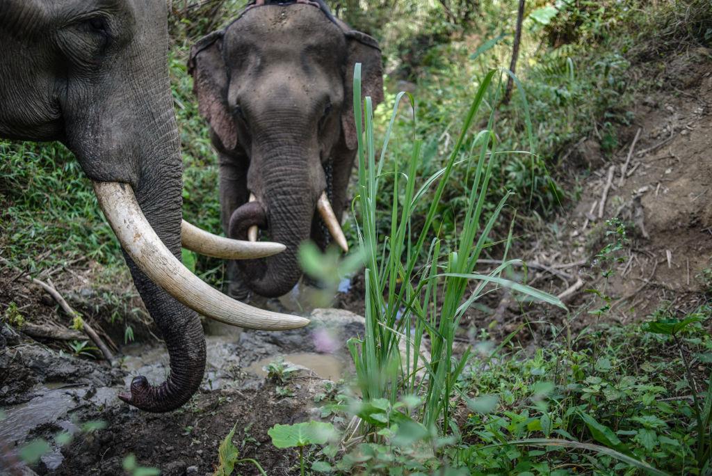 Şase elefanţi au murit în Thailanda în timp ce încercau să se salveze unii pe alţii