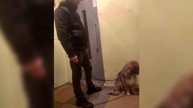 Barbatul cercetat penal că a lăsat să moară zeci de câini, filmat cum iese cu un câine din bloc