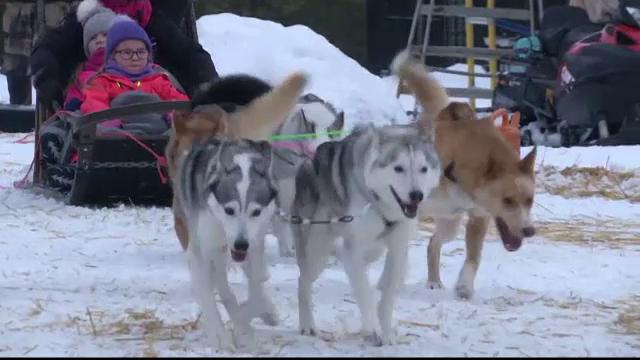 Cum s-au îmbogățit finlandezii de pe urma câinilor husky. Specialiștii sunt îngrijprați