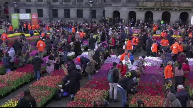 Sute de mii de lalele au acoperit o faimoasă piață din Amsterdam. Au fost date pe gratis