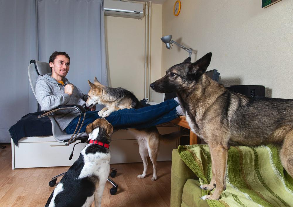 Câini și pisici la bloc, doar cu acordul vecinilor. Decizia instanței din Timișoara