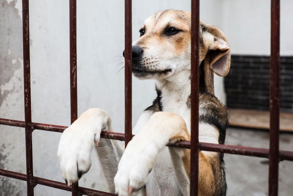Câini incinerați printre deșeuri, la un adăpost improvizat din Capitală. Două persoane sunt cercetate