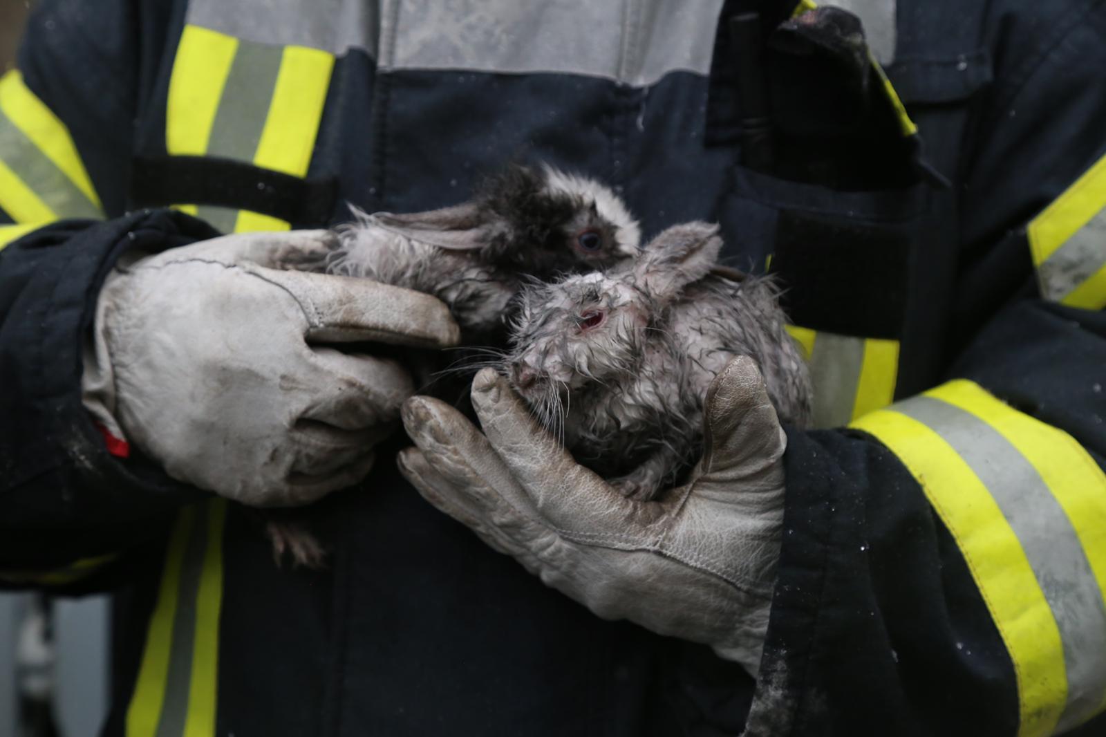 FOTO. Pompierii bucureșteni au salvat doi iepuri dintr-un incendiu izbucnit într-un bloc