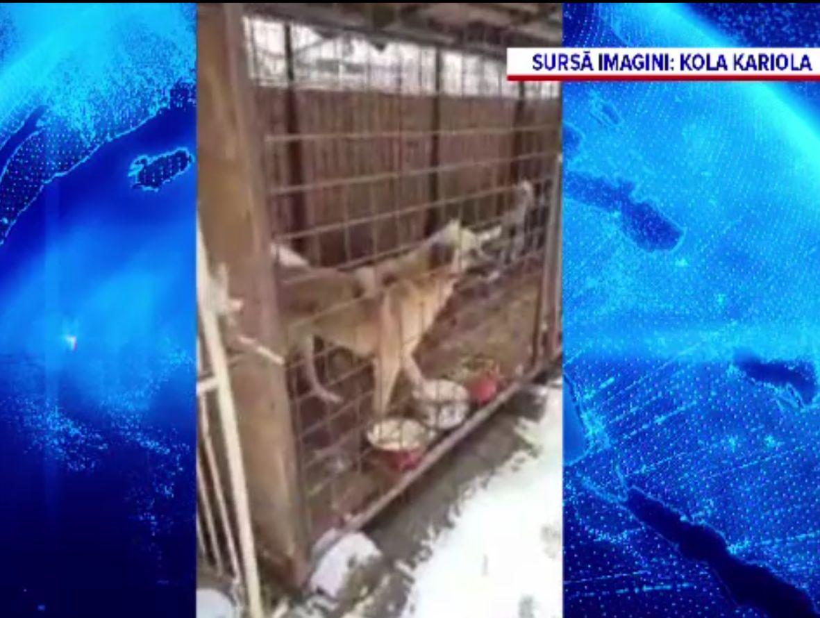 Câini ţinuţi în cuşti zile în şir, fără mâncare, la un adăpost din Târgu Lăpuş