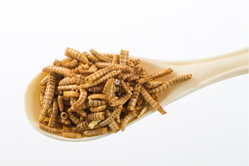 UE a aprobat consumul de insecte. Viermele de făină, cel mai nou produs alimentar