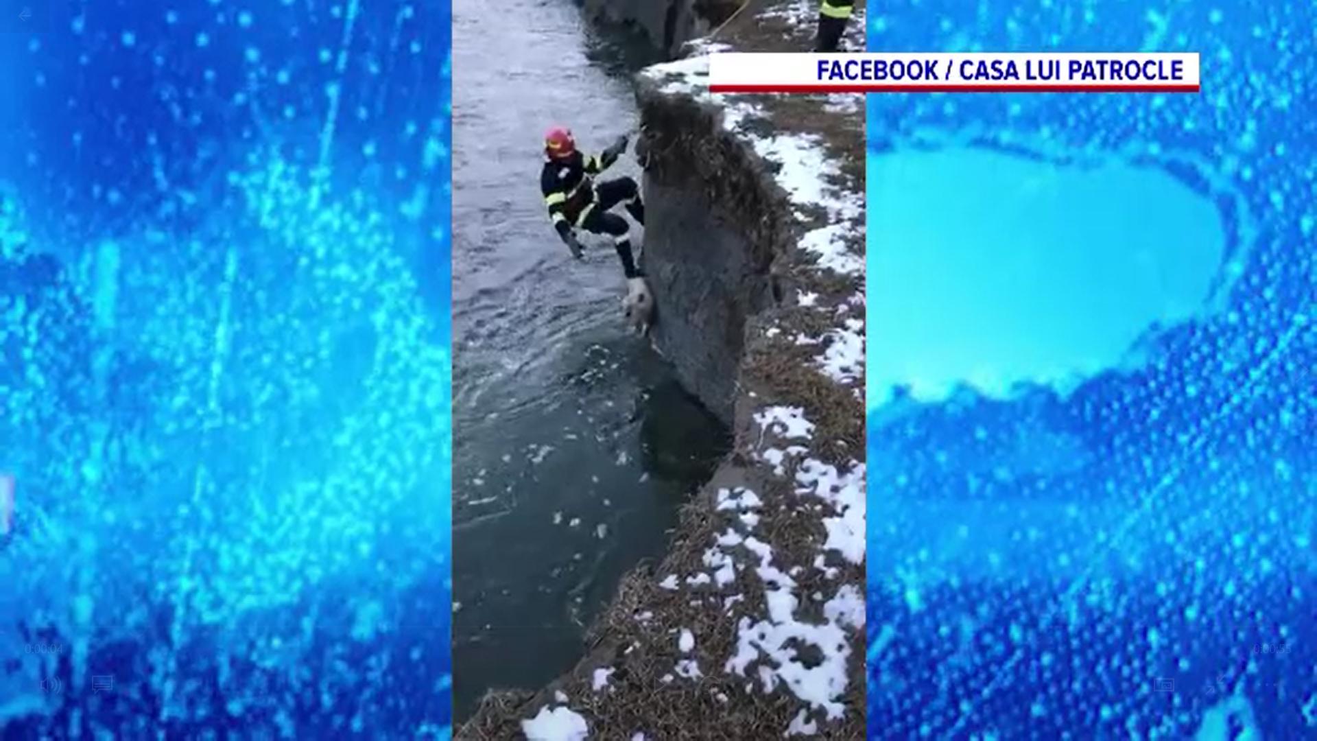 Pompierii au salvat din apa rece a râului Suceava un câine care risca să moară